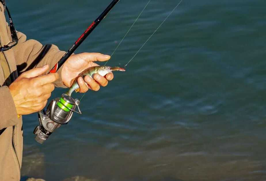 Best Bass Rods for the Money