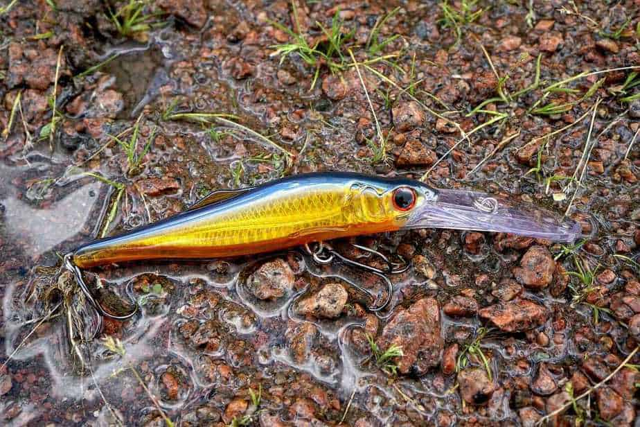 Which Types of Fishing Lures to Use