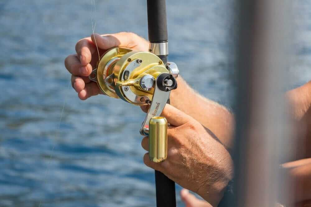 Catfish reels with bait clicker