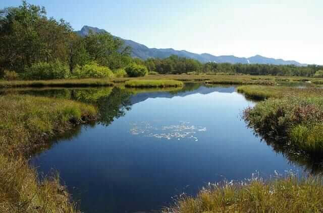 Lake with silkweed