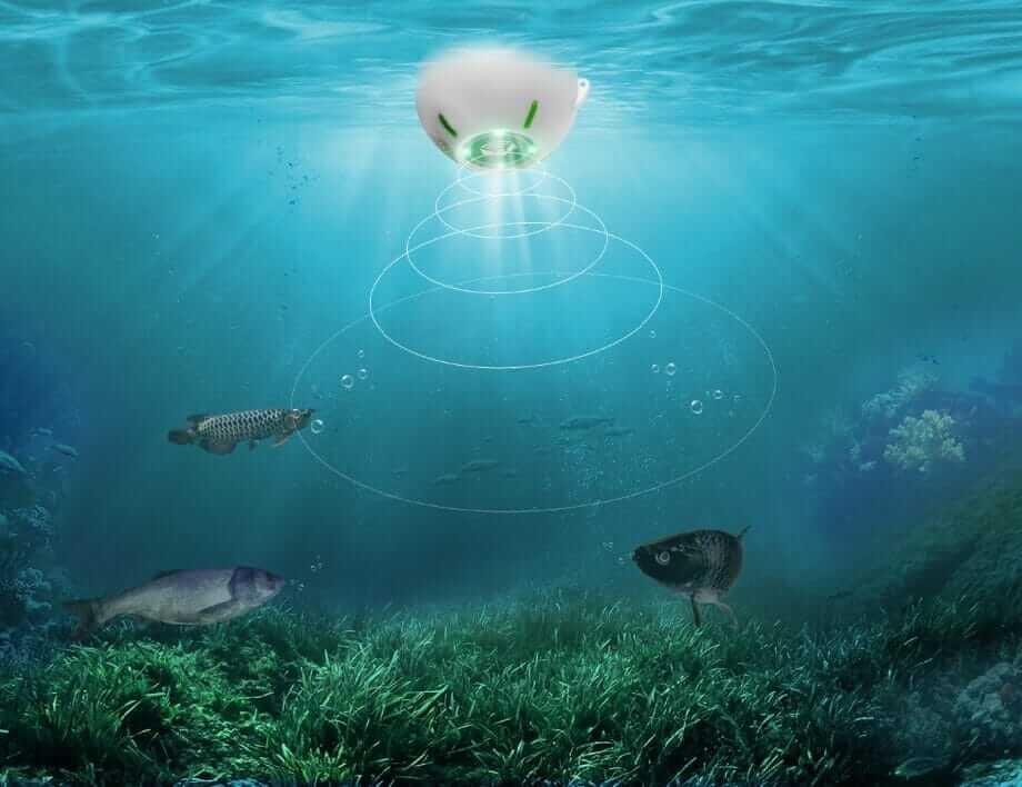Can Fish Detect Fishfinder