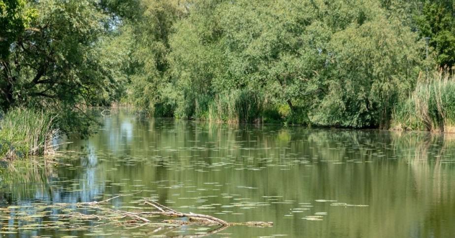 How Do Bass Get Into Ponds